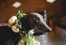 Weddings with your PET @Chirpee flowers by Steph Willoughby
