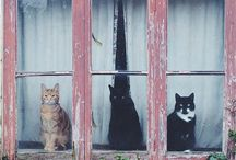 cats by window