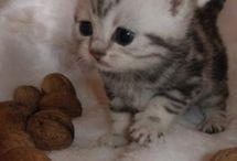 kitties / by Beth Baker