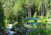 Spring in the Sierras