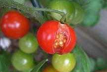 Tips on growing veg