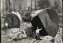 Logging / by Gil Sterner