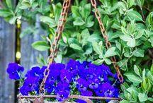 decorate in your garden