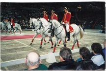 Конный спорт, лошади. / Выездка лошадей и подготовка всадников.