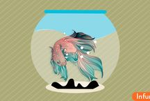 Как узнать, что рыба петушок болеет