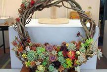 pozsgás koszorúk, Succulent Wreath / pozsgás koszorúk, Succulent Wreath