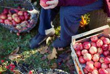 Fabulous autumn / by Gyöngyi Nagy