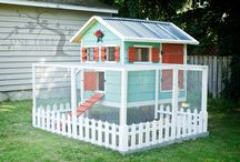 Chicken homes