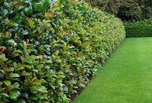 Grow, hedges
