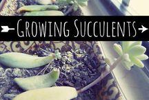 Plants & Gardening - Kertészkedés