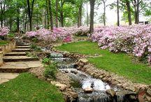 Dream garden / .