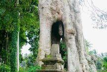 Taman Wisata Hutan Pala Sangeh | Gadogadoilmu