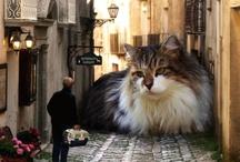 Cats! / by Nina M