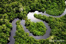 wonderful rainforest