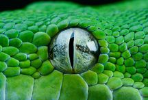 Coldblooded Critters / Reptiles, Amphibians & Fish