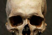 Skulls&etc