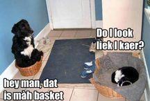 Funny animal pics / by Lori I.