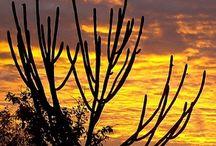 paisagens do sertão