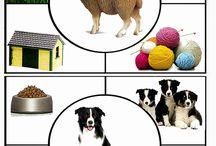 Zvieratá - domáce, hospodárske