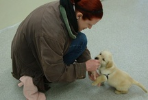 Puppy Training!