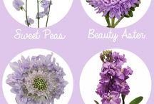 színek virágok