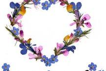Cicekler-flowers