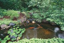 1631 - Ponds