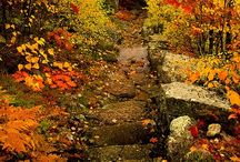 Fall Colors / by National Parks Conservation Association
