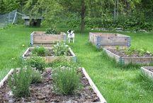 theconstantgardener / ideer til hagen, som jeg kan se på mens jeg sitter foran peisen om vinteren