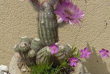 virágcserép - flowerpot / virágcserép - flowerpot