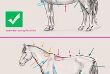 Pferde freiheitsdresur