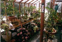 My new wishlist greenhouse