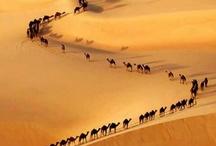 padang pasir