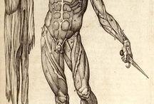 ▲ Anatomia Humana ●