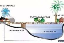 Picinas
