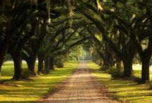 i luv trees