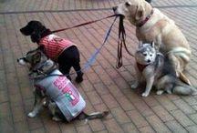 Dogs & stuffs