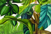 quadri giungla