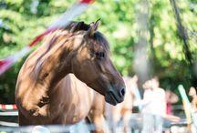Meine Pferde / Meine Pferde, mit denen ich am Standort Freiburg arbeite.  Sie sind großartig und ich bin sehr stolz, mit so tollen Tieren arbeiten zu dürfen.
