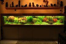 Aquarium / Aquascaping