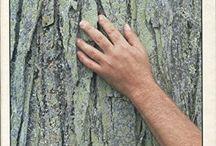 Libri arboricoltura
