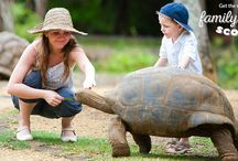 Things to do in Mauritius with Kids