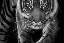Animals / Tiere