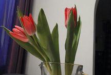 flowers / Flowers, Blumen, kwiaty
