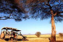 Tanzánia legszebb látnivalói, I. rész / 1964-ben, két külön nemzetállamokból alapították Tanzániát, amely Afrika egyik legnépszerűbb szafari úti célja, és egyben itt található Afrika legmagasabb helye, a Kilimandzsáró is. Az ország több tucat gyönyörű, fehér homokos stranddal büszkélkedhet, ilyen strandok találhatóak Zanzibár szigetén is. Íme néhány felejthetetlen látnivalói Tanzániában...