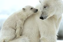 Bears for Chantal