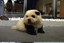 i want a puppy