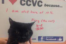 I love CCVC because...
