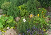 My Garden / garden own hands