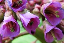 Kukat & Kasvit / Flowers & Plants